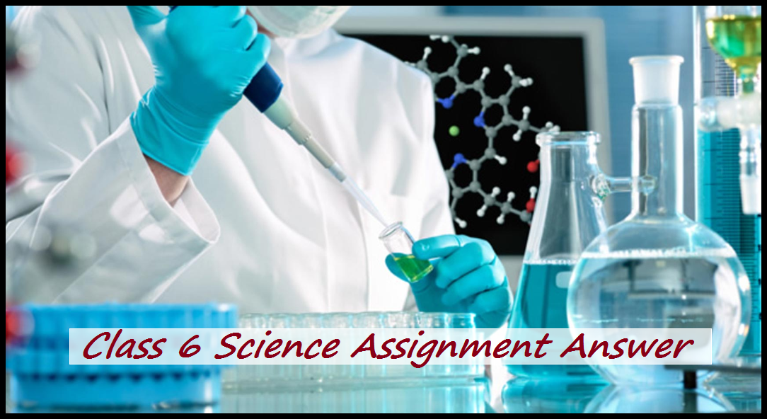 Class 6 Science Assignment