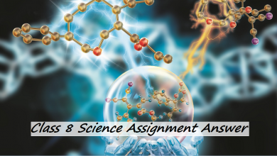 Class 8 Science Assignment